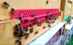 Včely v Chlumci